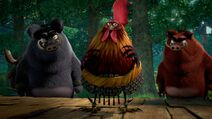 Rooster-brothers