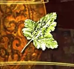 Leaf note 1