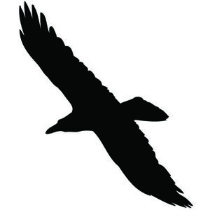 Raven-soaring