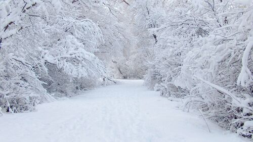 6670-perfect-snow-1920x1080-nature-wallpaper