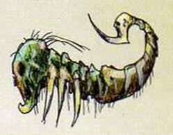 Escorpion Reyes Fuenrario