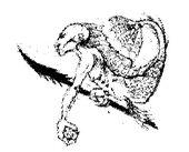 Mutación Criatura Sirénida