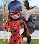 Ladybug in Animan