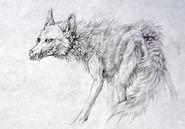 Coyote beast