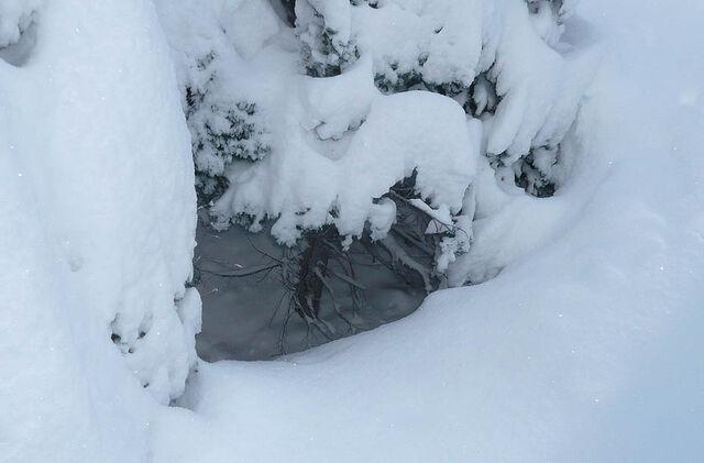 File:COrnflower shelter.jpg