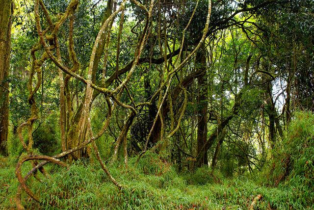 File:Viney forest.jpg