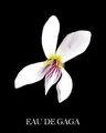 Eau de Gaga - White Violet