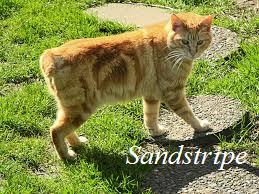 Sandstripe