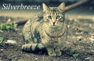 Silverbeeze