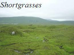 Shortgrasses
