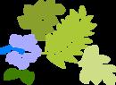 Hibiscus-hi