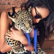 Celeste-leopard