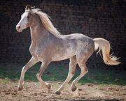 Unique-horse-colors-9