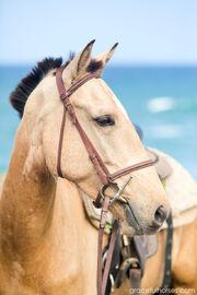 Horse-portraits-Atlantic-Shores-Stables
