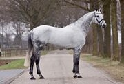 Euro-Stallions Quality-Time