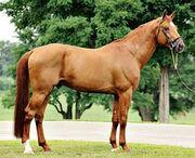 47b49299504a511ab51387667d28ad31--dutch-warmblood-warmblood-horses