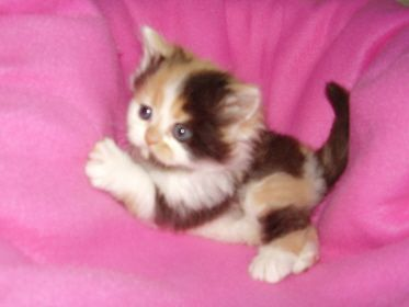 3f8217a33d1f47be2b0a4c65a2bfc3dc--adorable-kittens-cute-cats