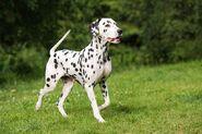 Dog-Milo