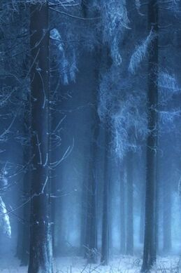 Mysterious-forest-in-winter
