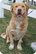 D8b0cf39ba65759bbe6178bf385908be--story-characters-golden-retriever-mix