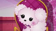 NS1E07B Poodle brillante
