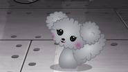 NS1E07A Poodle