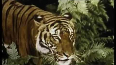HONEYMOON - LANA DEL REY (OFICIAL VIDEO)