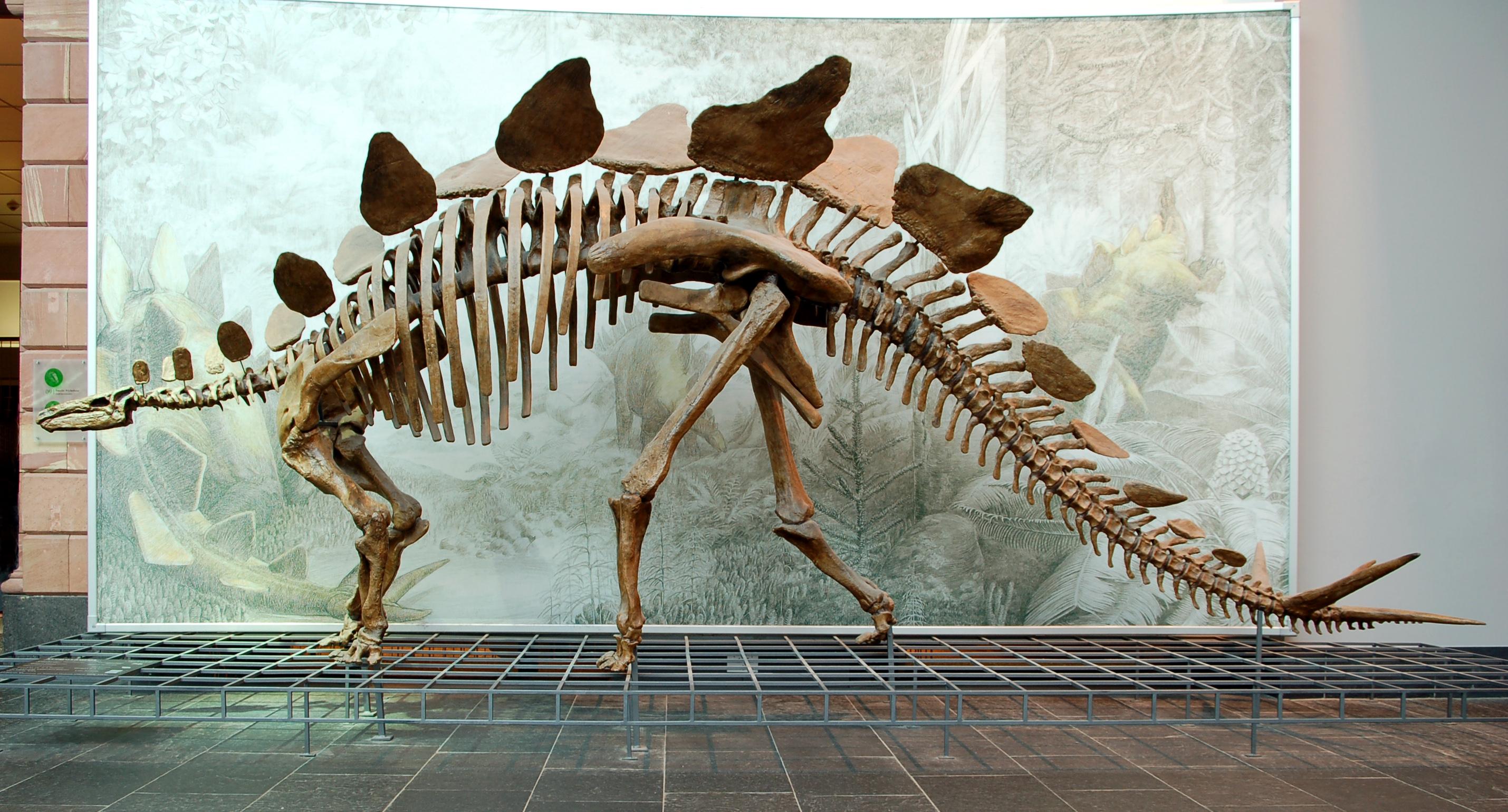stegosaurus land before time wiki fandom powered by wikia