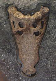 Swanage Crocodile Goniopholis kiplingi