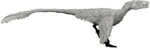 Dromaeosaurus by Tom Parker