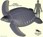 TurtleModels
