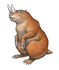 Ceratogaulus
