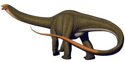Apatosaurus lousiae