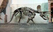 Trike skeleton