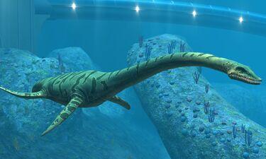00elasmosaurus