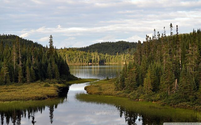 File:Mountain lake with coniferous forest-wallpaper-1152x720.jpg