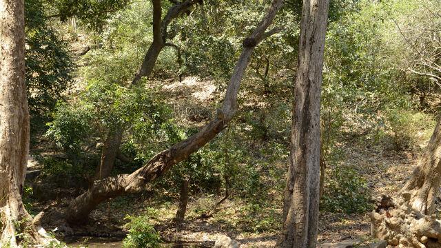File:Pescado forest 1.jpg