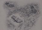 Redlipstickmurder size 8 shoe prints
