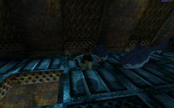 Lara vs Sharks