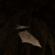 Bat SOTTR
