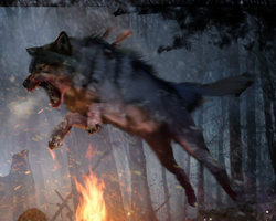 Wolf Loadingscreen