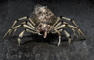 Giant-Spider Concept