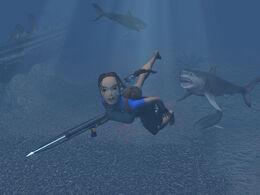 Lara and Sharks Near Maria Doria