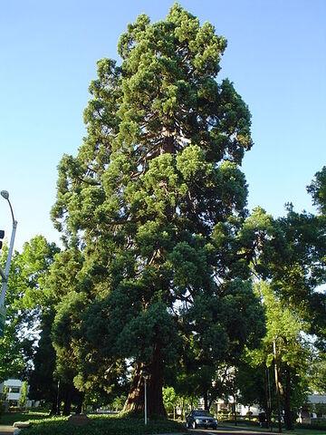 File:St alban's park.jpg