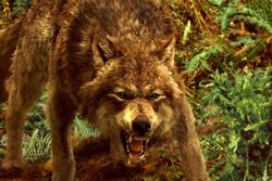 Jacob black wolf new moon