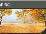 Oak Clearing