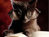 Лабораторный кот