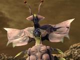 Wailing Larva