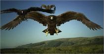 Birdemic1