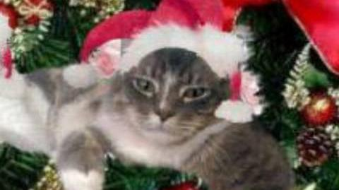 Lord Law/We Wish You A Merry Christmas - thecatdiaries